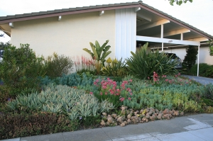 An Alameda, CA home landscaped with low water use succulents that are easy to maintain. Photo and abbreviated caption by Feix Landscape Design via Creative Commons.