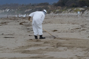 Trained oil spill responders literally combing Coal Oil Point Reserve to clean spilled oil. Coal Oil Point Reserve at UC Santa Barbara is protected nesting habitat for Western Snowy Plovers (http://coaloilpoint.ucnrs.org/SnowyPloverProgram.html). Photo taken on May 26, 2015 by Callie Bowdish, all rights reserved.