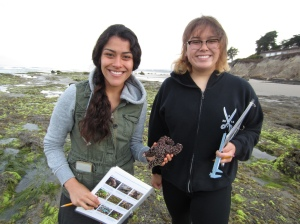 Carolina Espinoza (left) and Vanessa Esguerra (right) measure a sea star (Pisaster ochraceus) at first light during low tide intertidal monitoring at Coal Oil Point Natural Reserve.